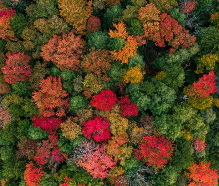 Overview of trees with fall foliage