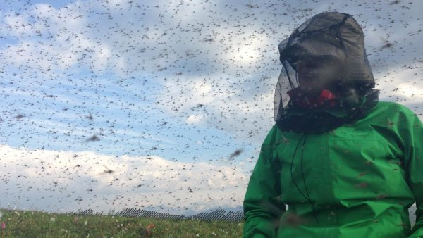 Shannon sweet among mosquitos
