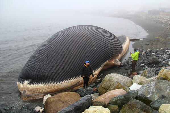 Fear Of Exploding Whale Grips Newfoundland Town Men S Journal