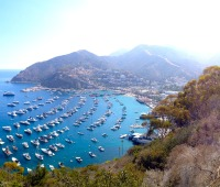 A view of Santa Catalina Island's harbor from a road in the mountains