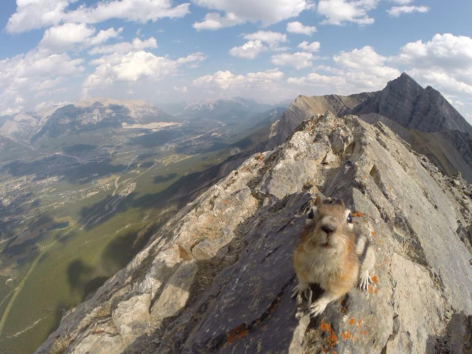 Looking over Canmore atop Ha'Ling  ; Photo James