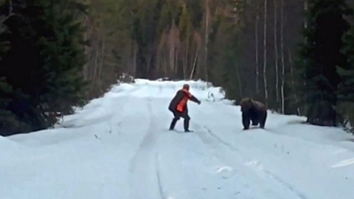 Swedish man repels a charging bear while filming the training of a new hunting dog. Photo: Screen grab