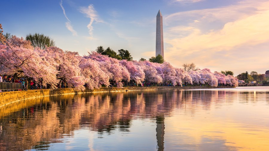 Washington Monument in D.C. with the Tidal Basin in the spring