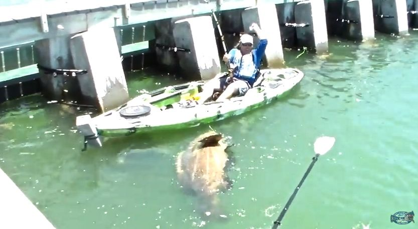 Fisherman catches what likely is the biggest goliath grouper ever caught from a kayak, screams with excitement. Photo: Screen grab