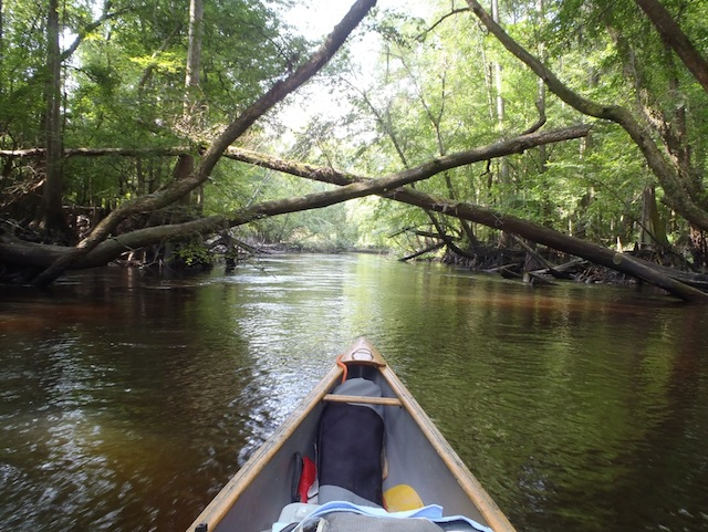 Yes, it was hot. But we paddled in the shade. Photo by Burt Kornegay