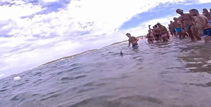 Video screenshot shows swimmers coming to the rescue of a trapped shark.