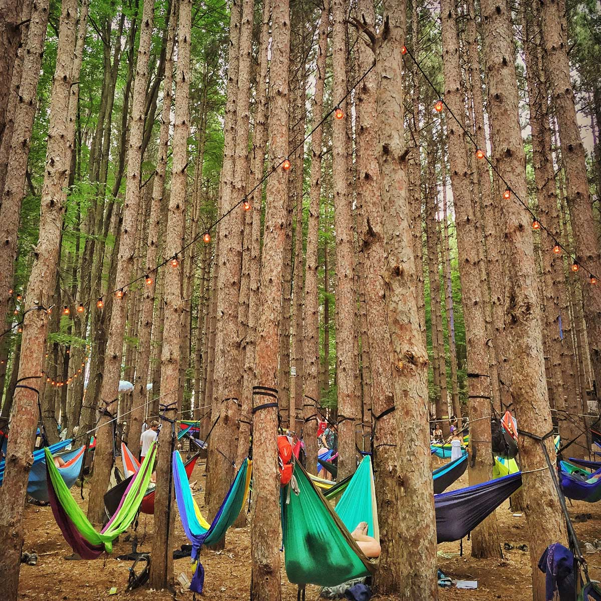 Electric Forest Music Festival features a forest of hammocks to chill in. Courtesy of @HammockLiving