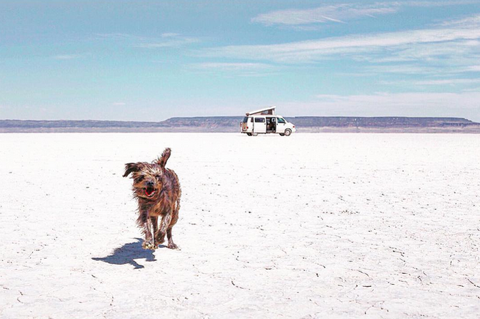 #Vanlife is the good life (at least it is for Max the rescue dog). Photo: @AlisonTravels