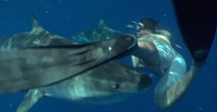 A tiger shark nearly chomps down on free diver's leg. Photo: Screen grab