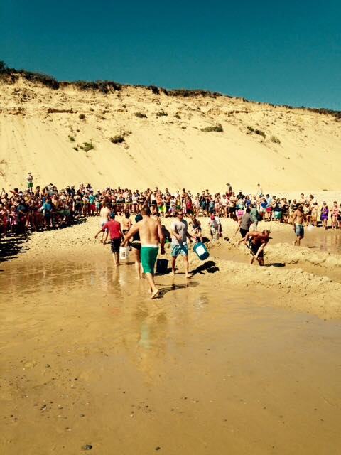 About 100 people participated in the rescue effort of a beached great white shark. Photo: Wellfleet Police Department
