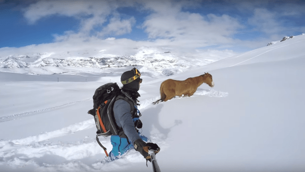 Chile horse rescue gopro