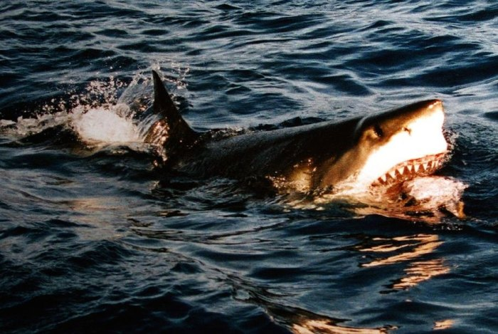 A Venezuelan man was attacked by a shark moments before a rescuer was about to pluck him from the sea.
