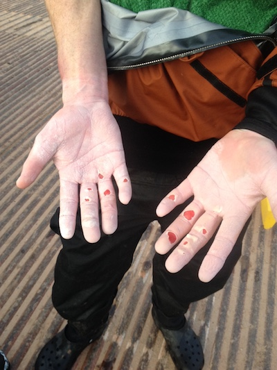 Ryan Casey's hands at the Pearce Ferry takeout. Photo courtesy Ben Luck