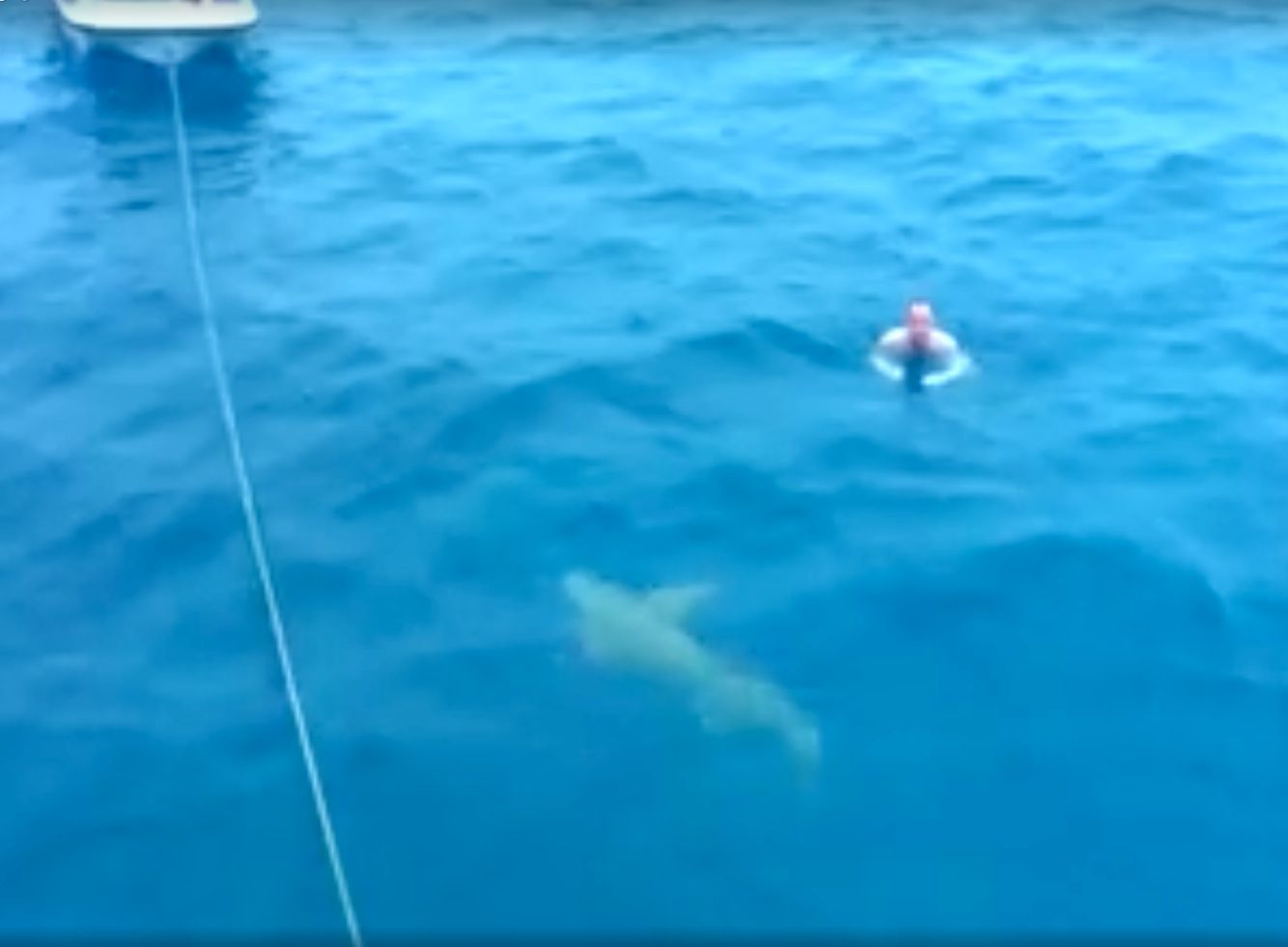 Russian swimmer reacts calmly to an approaching shark in Maldives.