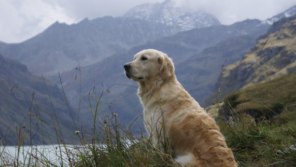 dogs national parks