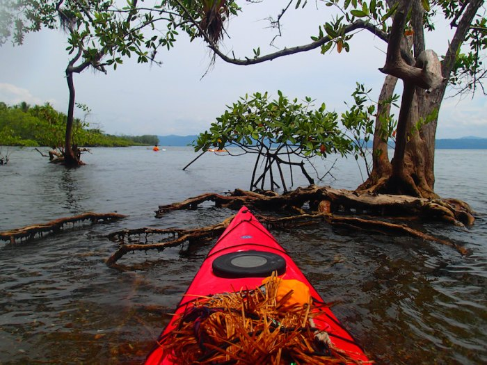 Costa Rica has it all, including mangroves. Lots of mangroves.