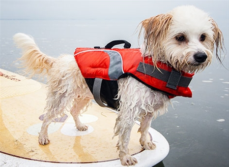 SUP with your pup safely, by outfitting them with a CFD, like this one by RC Pets.   Photo courtesy of RCpets.com