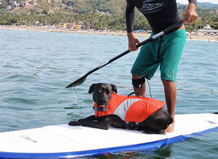 Canine life jackets are affordable, and, a necessary piece of gear to help ensure your pup's safety.   Photo courtesy of RCpets.com
