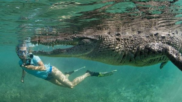 Daughter with crocodile