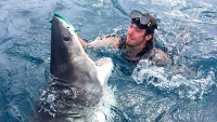 Diver with shark