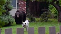 Grizzly and dog