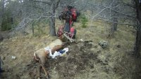 The hunter fell backwards off the ATV and onto the elk's antler.
