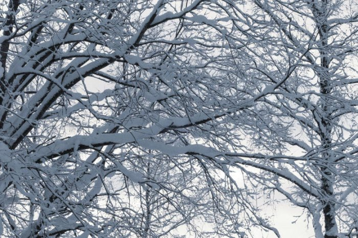 Winter is especially dangerous, as the weight of snow can cause large branches to snap unexpectedly. Photo: Courtesy of OFFGRID