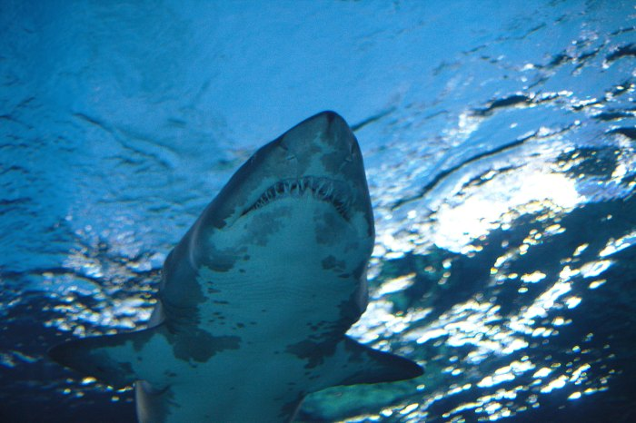Sharkbanz claims to reduce the possibility of shark attack, but experts claim we still don't know enough about them. Photo: Malkusch Markus/Flickr