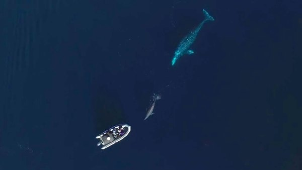 Graywhales