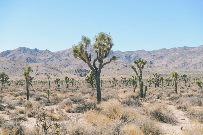 The desert during winter is one of the most unique environments on the planet. Photo: Courtesy of Chelsea Bock/Unsplash