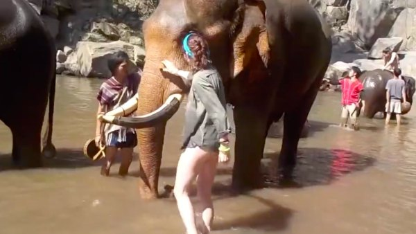 Elephant tosses woman into air