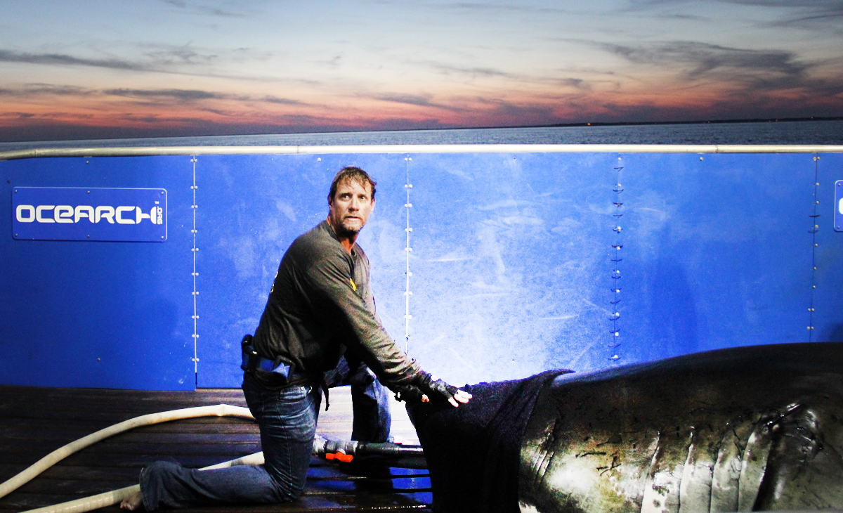 Is the Famed Great White Shark, Mary Lee, Gone Forever?