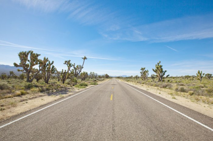 Road in Mojave National Preserve and part of Joshua Tree forests