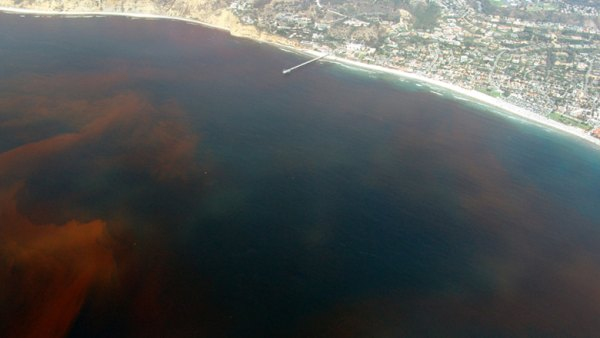 La Jolla Red Tide.780