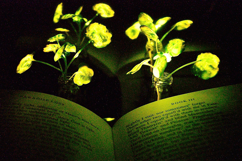 Forget Lamps, MIT Just Created Glowing Plants