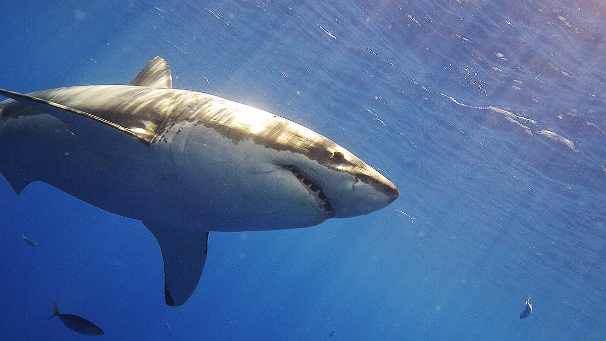 2017 Saw the Most Pacific Coast Shark Attacks Since 2004, Report Says