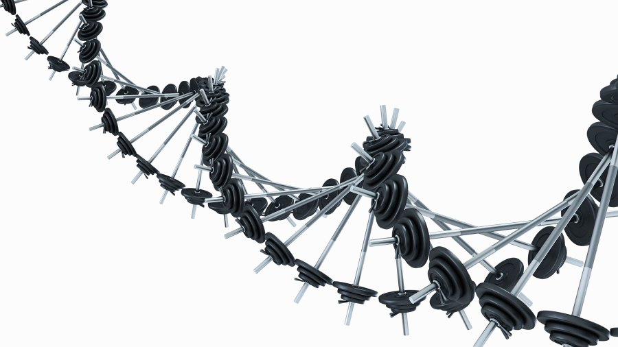 Barbells linked to form a DNA chain.