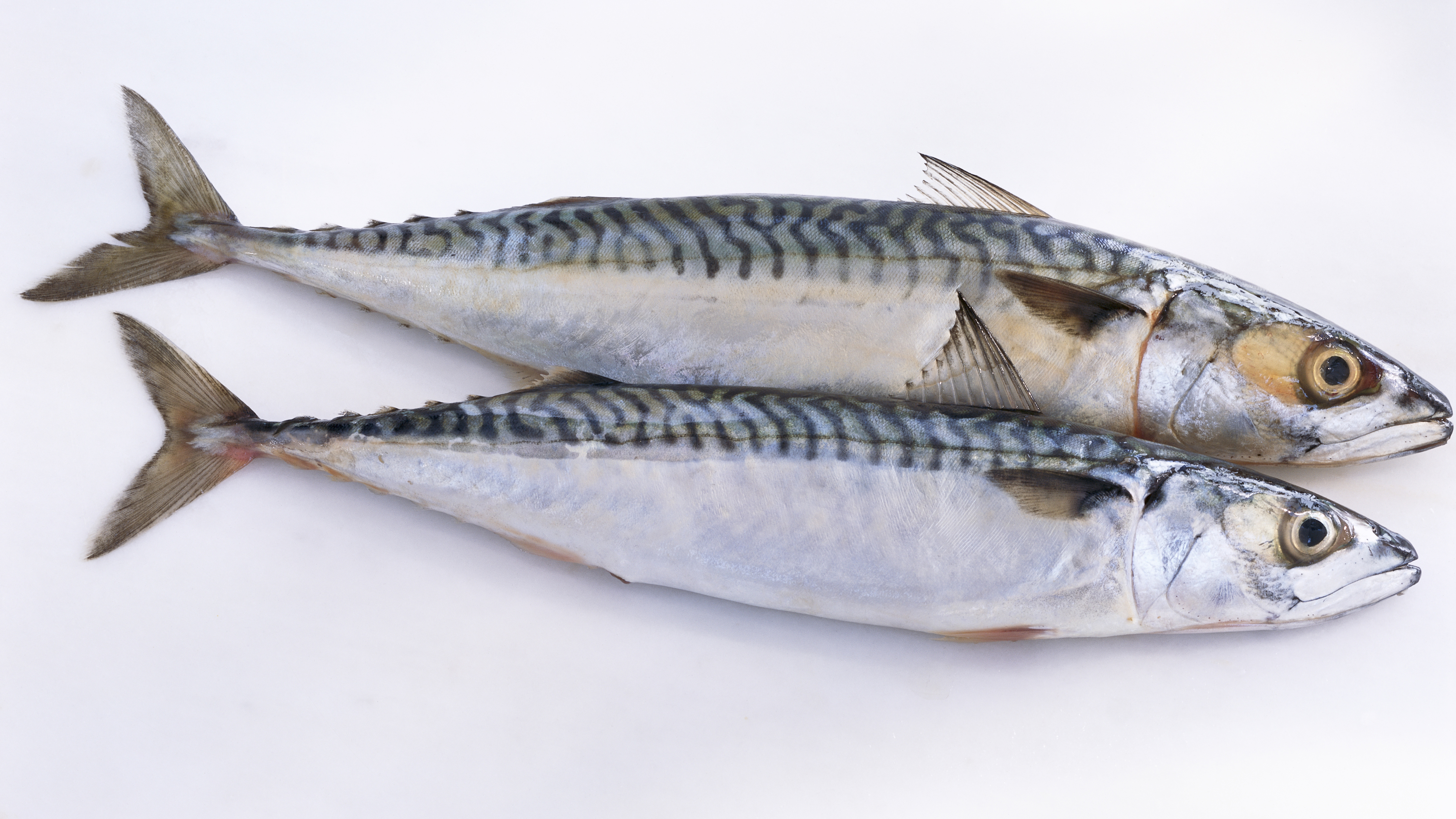 Why Sardines (Yes, Sardines) Are Basically the Perfect Protein