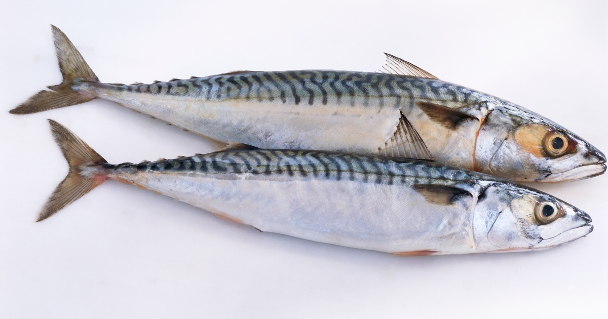 The Reason Why Sardines Are the Perfect Protein