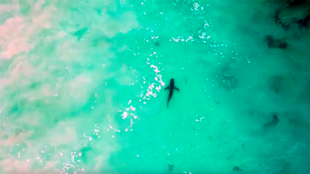 John Florence and Friends Chased Out of Water by Sharks in Western Australia