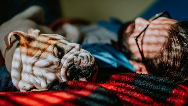 Man asleep in bed with dog