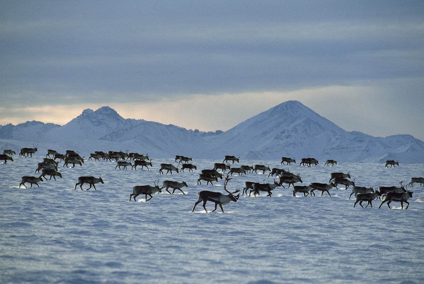 Arctic National Wildlife Refuge, Brooks Range, Alaska, USA, Novemeber.