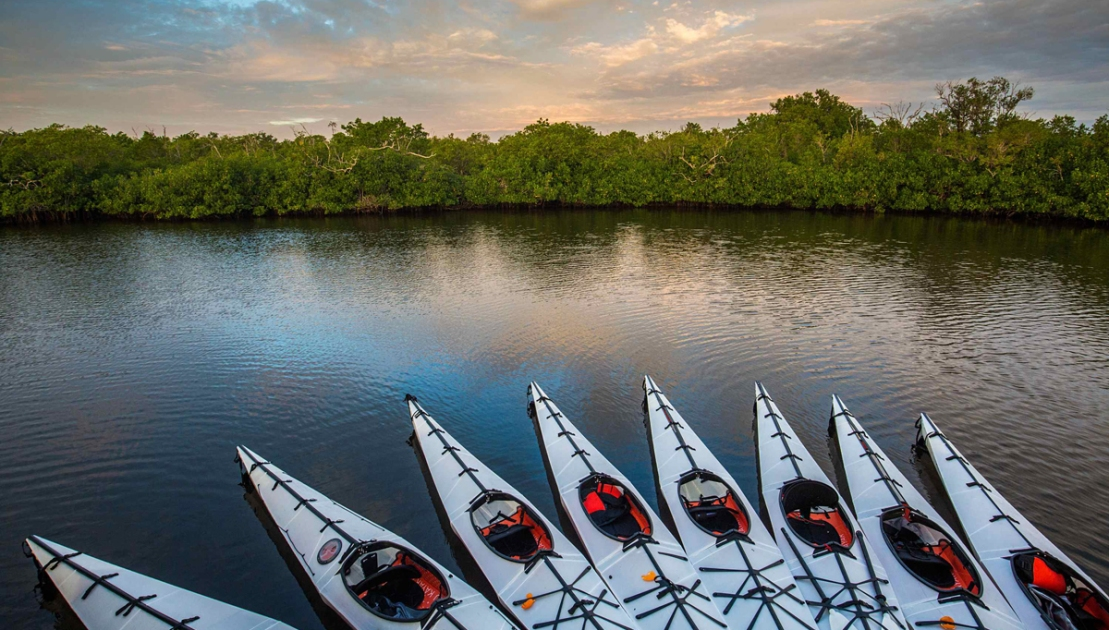 The Ultimate Guide to Exploring the Everglades by Kayak