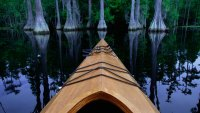 Canoe gliding past cypress trees
