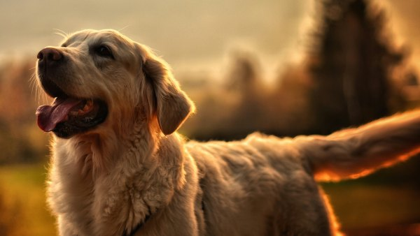 keep your dog tick free this summer