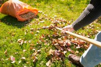 Home Chore Workout Raking Leaves