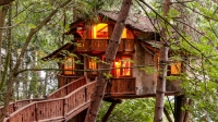 Wooden walkway to illuminated treehouse