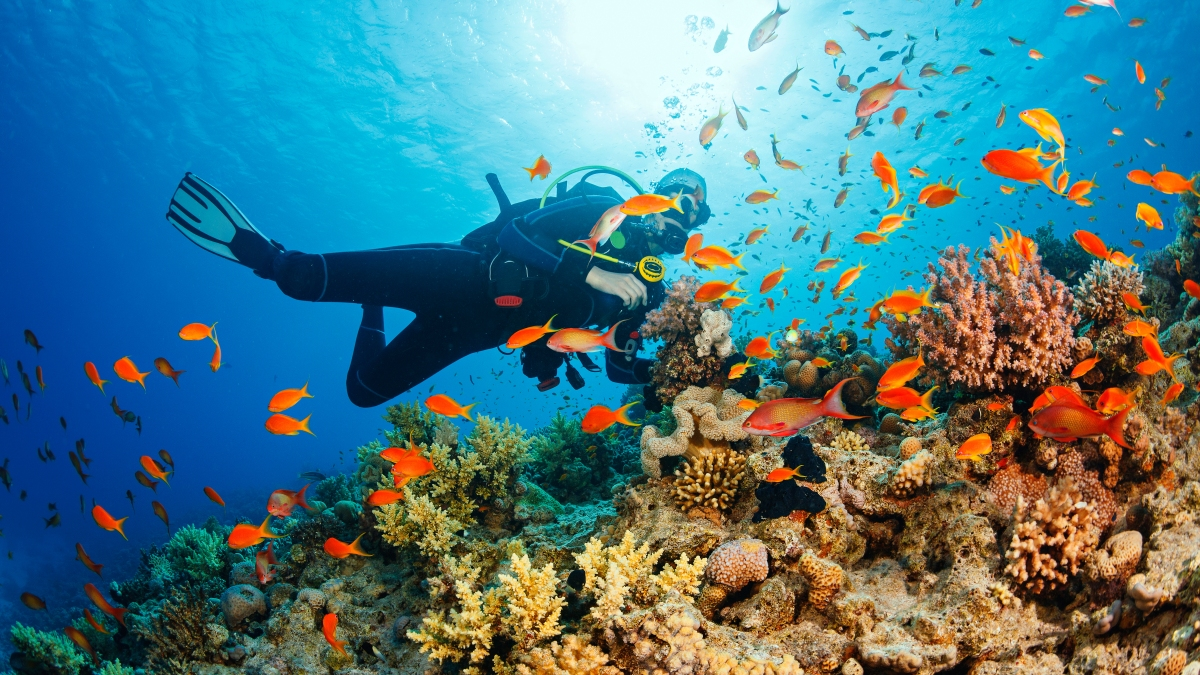 Beginners Guide How To Become A Certified Scuba Diver