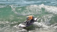 surfing-dog-main