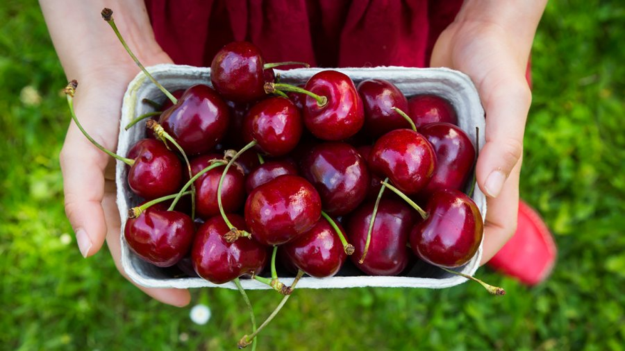 holding cardboard box of cherries, close-up